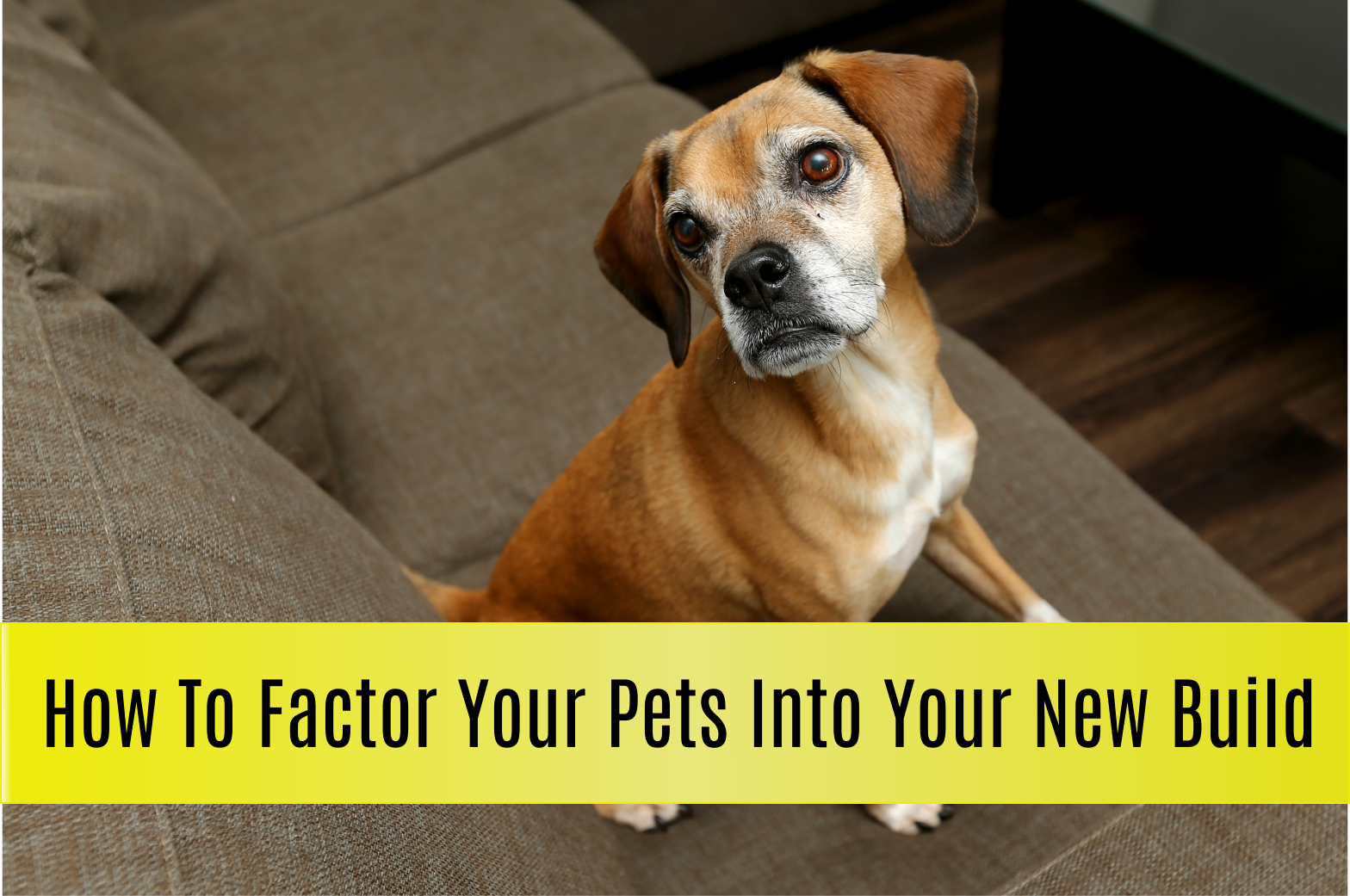 how to factor your pets into your new home build with emerald park homes custom home builder regina YQR mike holmes approved